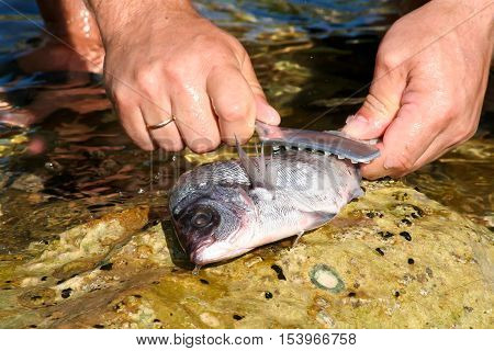 Fish processing / Fish processing outdoors. Detail.