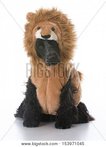 english cocker spaniel wearing lion costume