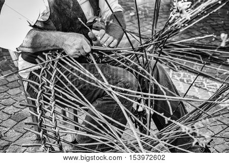 Artisan builds wicker baskets using the branches of Salix viminalis.