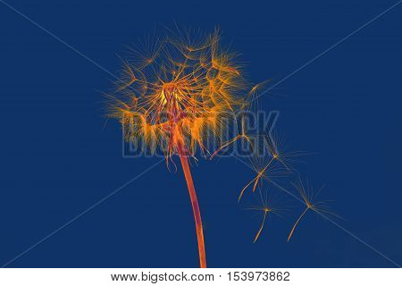 dandelion and its flying seeds in a bright color inversion