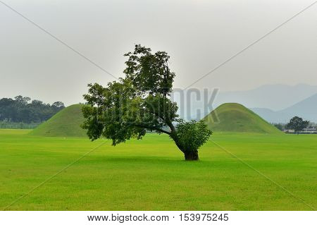 one green tree and two grave in gyeongju city