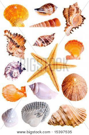 14 mussels and star-fish, studio isolated on white.