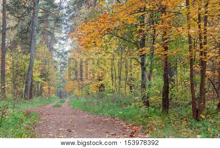 Pathway through the autumn forest. Autumn forest covert. Tinted photo.