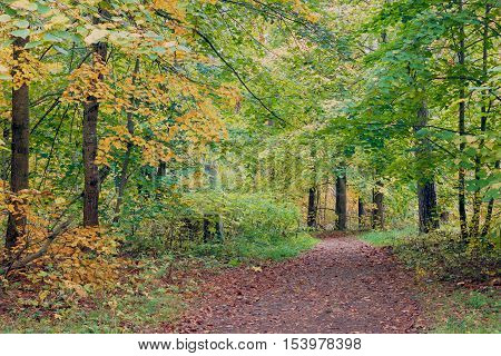 Colorful autumn trees in forest tinted photo. Autumn forest covert.