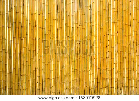 bamboo fence isolated on white background and texture