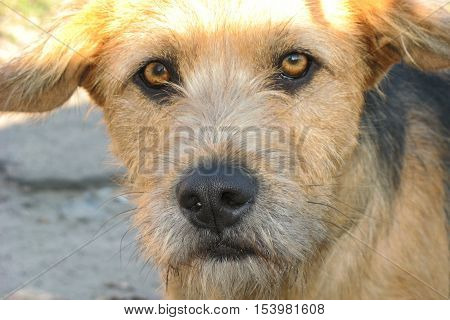 Brown sad stray dog. The hungry stray dog.
