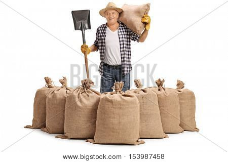 Mature agricultural worker standing behind burlap sacks with a shovel and a sack on his shoulder isolated on white background