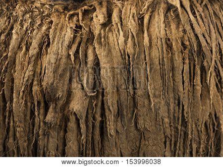 Details of a Poitou donkey dreadlocks hair