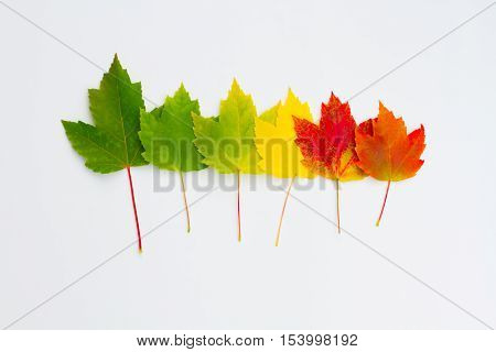 Colorful leaves in a row on white background.