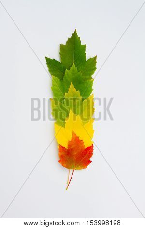 Colorful leaves in a vertical row on a white background.