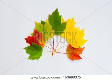 Colorful fall leaves on a white background.