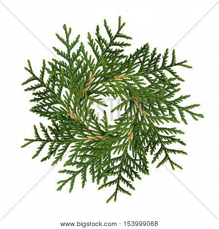 Christmas wreath from thuja twigs isolated on white