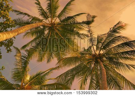 looking up at coconut trees at the beach at sunset