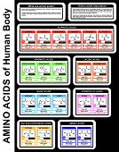 Vector - Amino Acids of Human Body (structure of compounds, groups, details) Aliphatic, Aromatic, Acidic, Basic, Sulfur-containing Acids - DNA condon - Forming Proteins - Educational Material poster