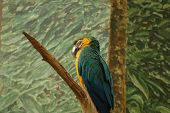 a parrot on a branch. Photo has noise at full size but looks OK at smaller sizes poster