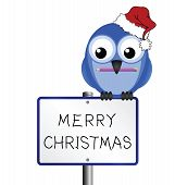 Bird with hand written Merry Christmas message poster