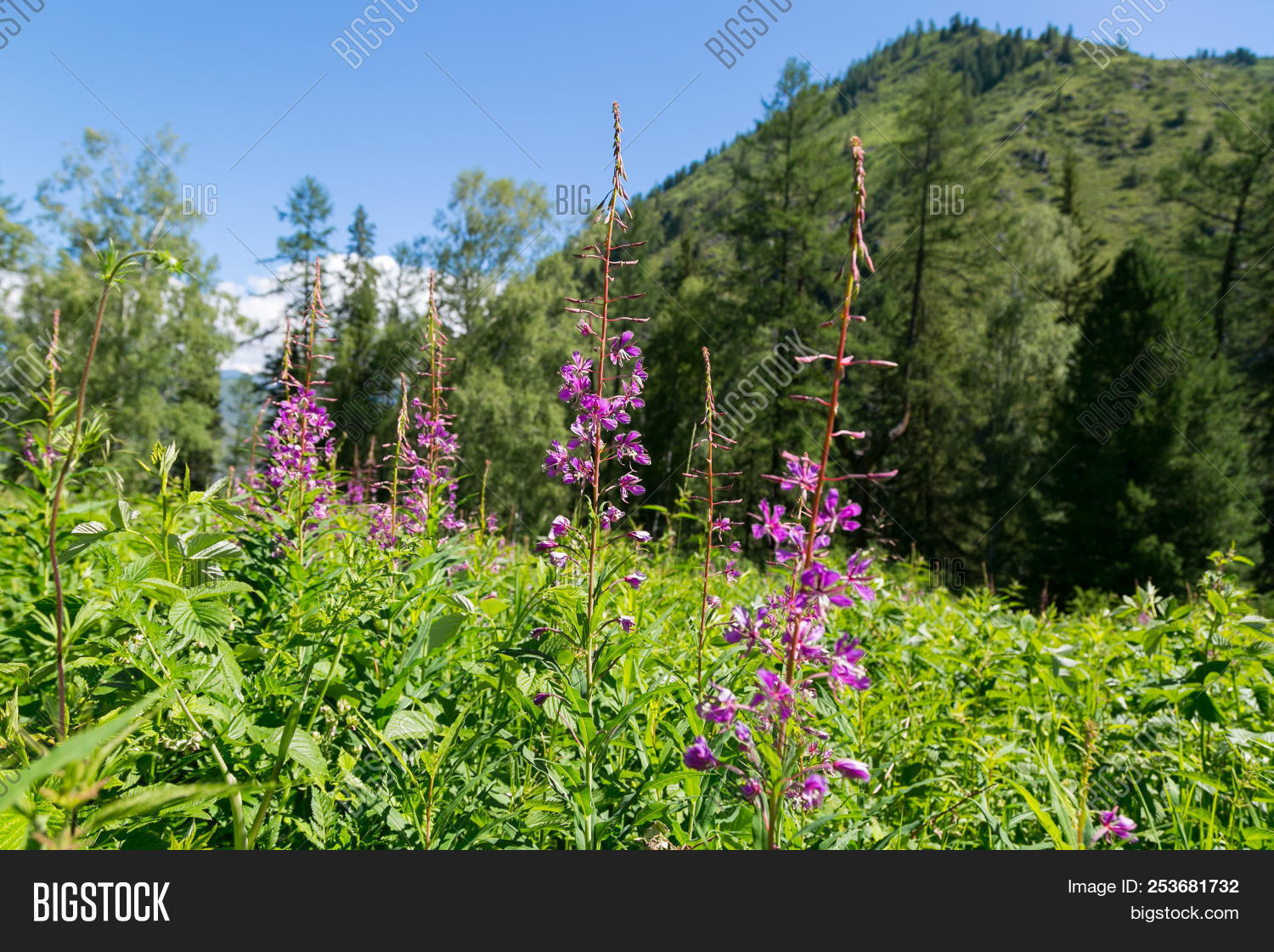 Red Flowers On Image Photo Free Trial Bigstock