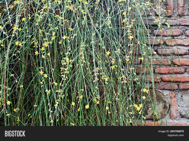 Old Brick Wall Image Photo Free Trial Bigstock