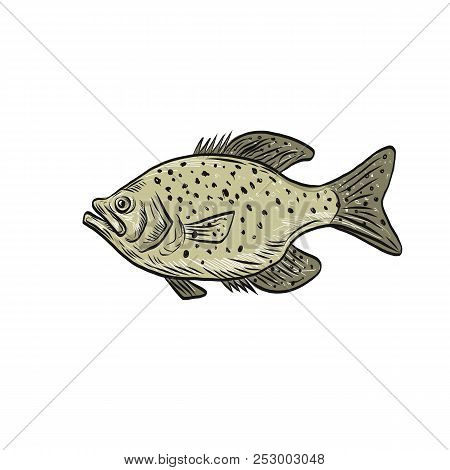 Drawing sketch style illustration of a crappie fish, papermouths, strawberry bass, speckled bass, specks, speckled perch, crappie bass, calico bass, a North American fresh water fish viewed from side. poster