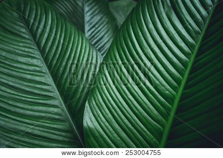 Green Leaf Background Dark Green Leaves Green Leaf Background Dark Green Leaves