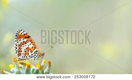 Beautiful Butterfly On A Meadow.  Brush-footed Butterflies. Copy Spaces.