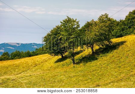 Beech Trees On A Grassy Hill. Lovely Scenery With Distant Mountain