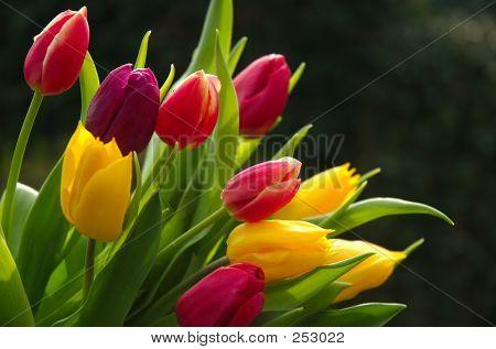 Tulip18_filtered