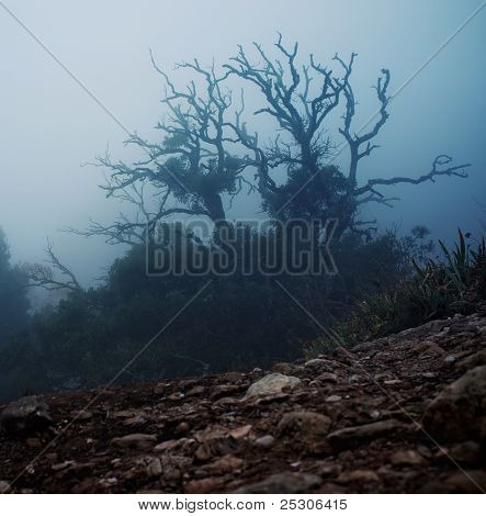 Old spooky tree  in the morning