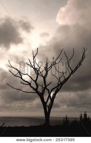 Dead Tree Against Stormy Sky