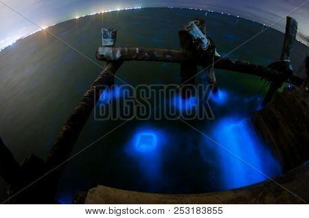 Glowing Marine Plankton,Plankton gleam in the sea poster