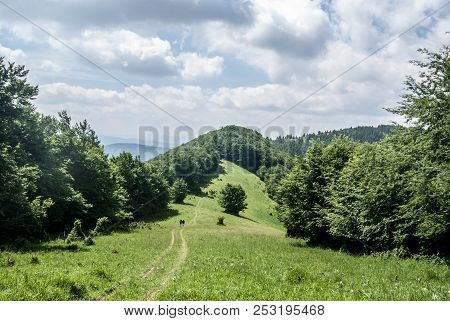 Mountain Scenery With Mountain Meadow, Hiking Trail With Few Hikers, Hills Covered  By Forest And Bl
