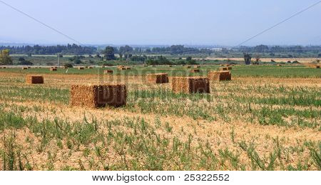 Landscape with hay stacks on a beautiful sunny day