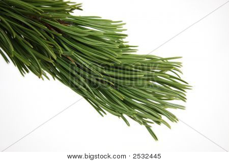 Fir branch christmas branch isolated on white. poster