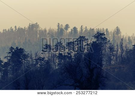 Tranquil Foggy Wintery Scene Of Naked Deciduous Trees And Conifers