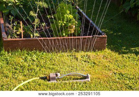 Oscillating Sprinkler In A Garden, Orcas Island Wa