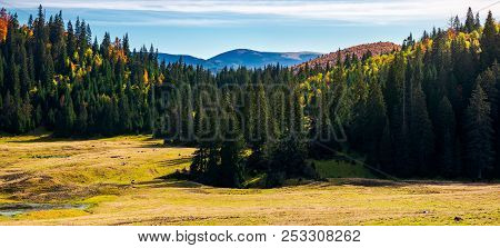 Forested Landscape In Autumn. Spruce Trees On The Meadow. Panorama Of Mountain Ridge In The Distance