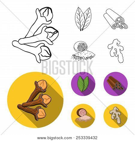 Clove, Bay Leaf, Nutmeg, Cinnamon.herbs And Spices Set Collection Icons In Outline, Flat Style Vecto