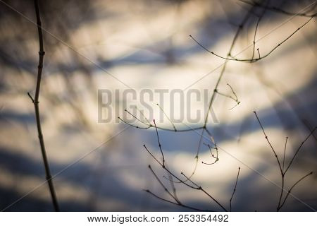 Tree Branches Abstract In The Winter Time