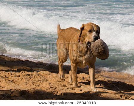 Coconut Dog
