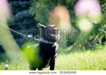 Black Dog Outdoor In Summer Forest Green Lawn Grass