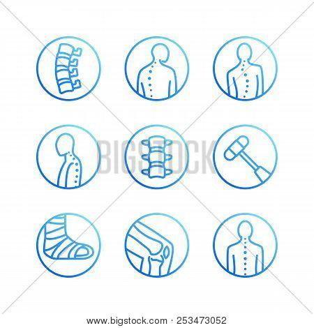 Spine, backbone flat line icons. Orthopedics clinic, medical rehab, back trauma, broken bone, posture correction scoliosis. Health care hospital circle signs, vector logo poster