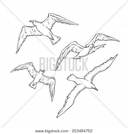 Vector Sketch Set Flying Seagulls. Bird Gull Angler Monochrome Black Outline Illustration Isolated O