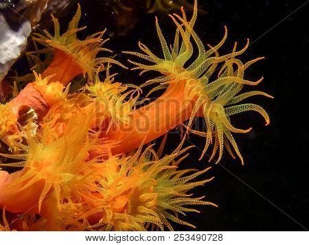 Coral Reef In Carbiiean Sea Orange Cup Corals