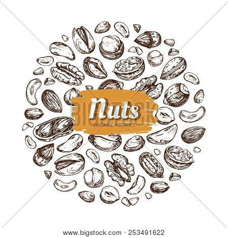 Eating Nut Label. Hand Drawn Nuts And Seeds Vector Emblem Isolated On White Background. Natural Draw