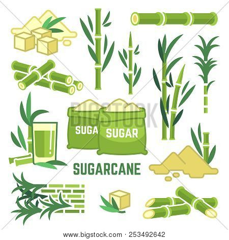 Sugar Plant Agricultural Crops, Cane Leaf, Sugarcane Juice Vector Icons. Sugar Cane, Sweet Plant, Na