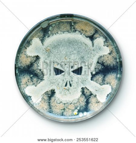 Petri dish growing bacteria in the shape of a skull and crossbones