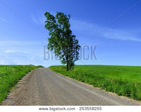 Isolated Tree Besides Dust Country Road With Contrasting Blue Sky And Green Fields.
