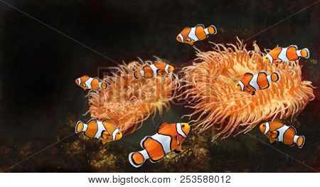 Sea anemone and clown fish in marine aquarium. Isolated on black background. Copy space for text. Mock up template