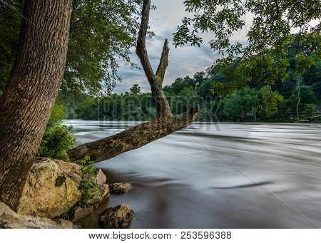 Old Tree Hangs Over French Broad River Near Asheville
