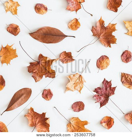 Autumn Composition. Pattern Made Of Dried Autumn Leaves On White Background. Autumn, Fall Concept. F